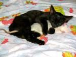 Котенце и мишка